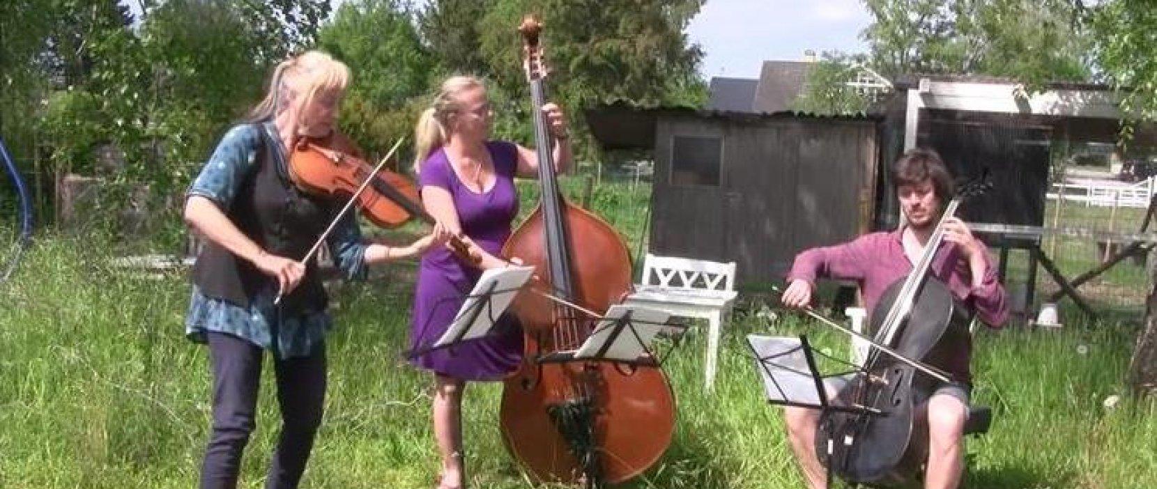 Foto af lærere, der spiller bratsch, kontrabas og cello
